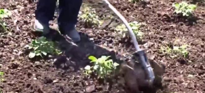 Прополка картошки с применением триммера или мотокосы