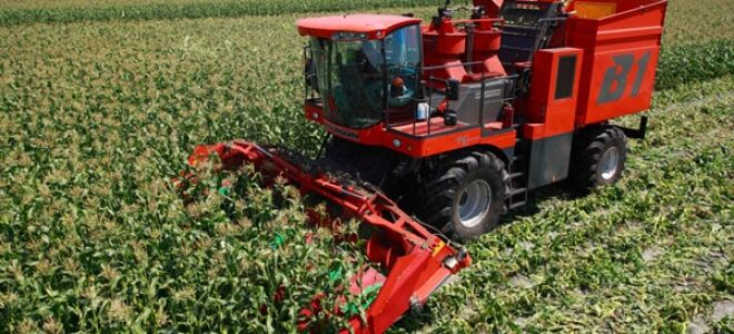 Кукурузоуборочные комбайны – разновидность узкоспециализированной сельскохозяйственной техники