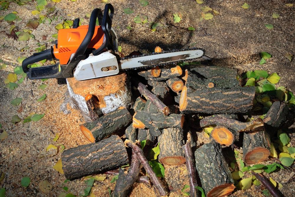 Разновидности электропил по дереву