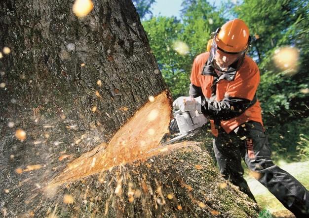 Как правильно валить деревья бензопилой: правила техники безопасности