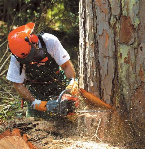 Спилить дерево бензопилой